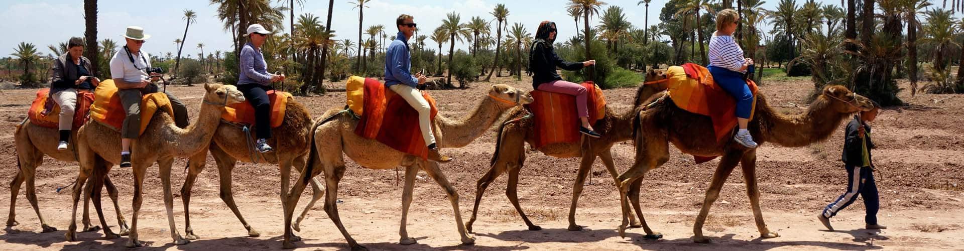 camel trekking Marrakech